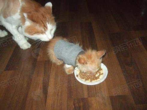 猫咪吃蛋黄对身体会有危害吗?